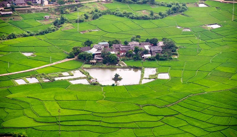 Vietnam-rice-field-in-Mai-Chau